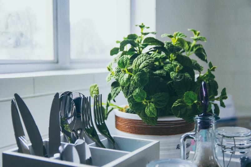 Potted Green Plant Kept Alongside Forks And Knives Stand In The Kitchen Representing How To Integrate Natural Elements In Your Kitchen
