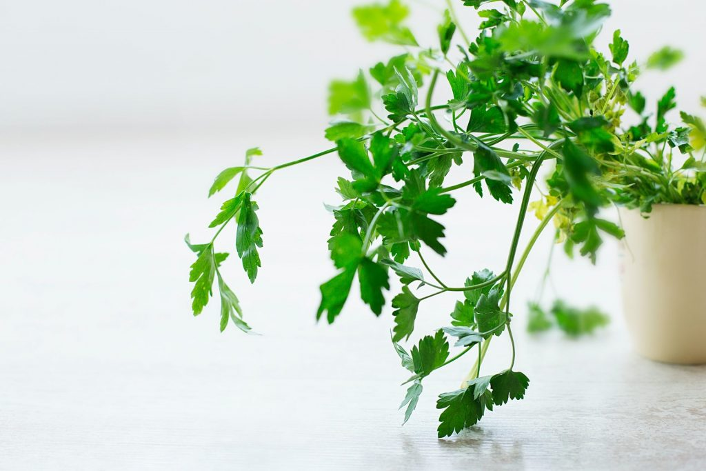 A part of a sustainable and green kitchen can be having your own kitchen garden, a potted herb plant.
